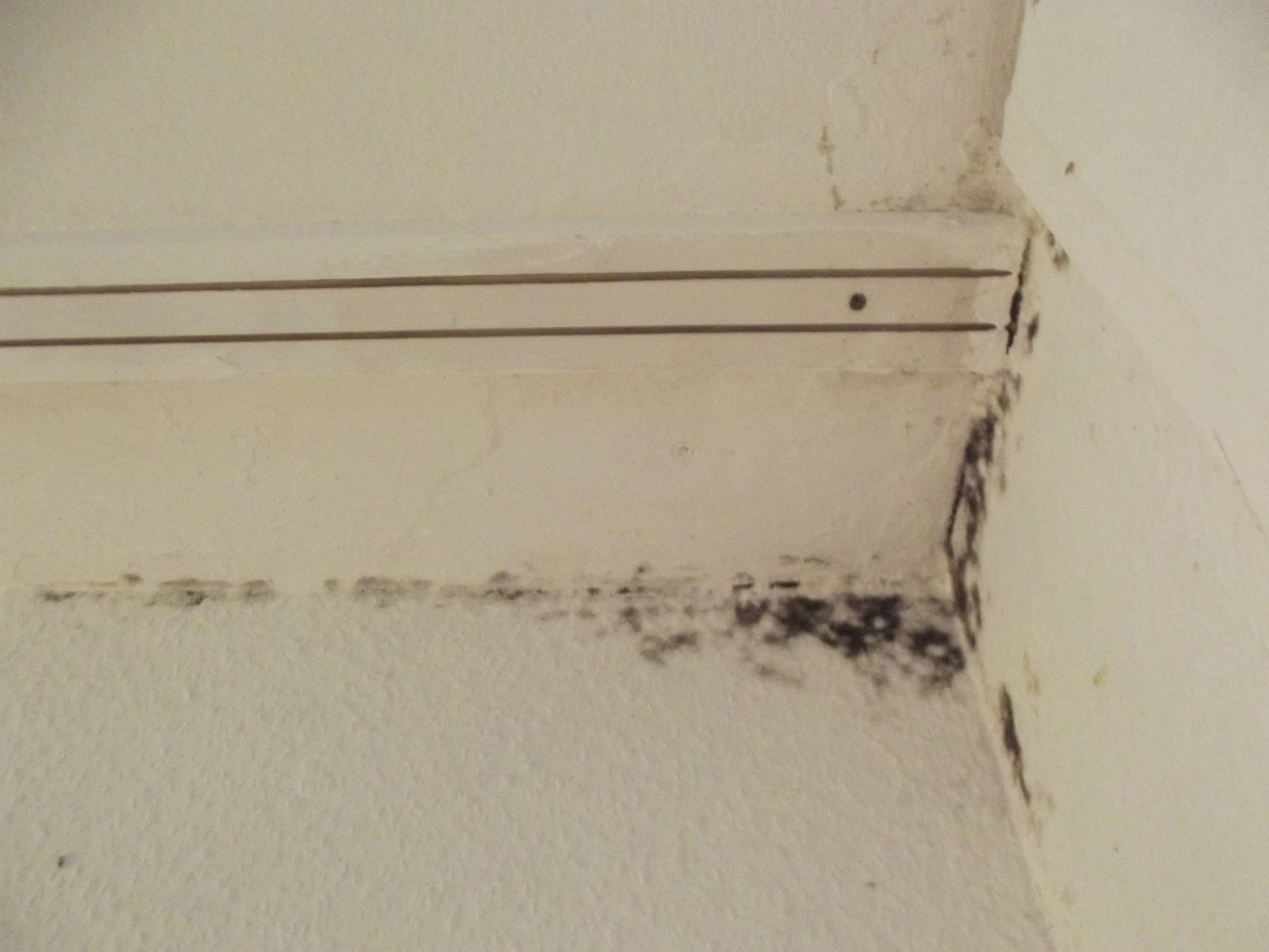 black mold growing in the corner of a house